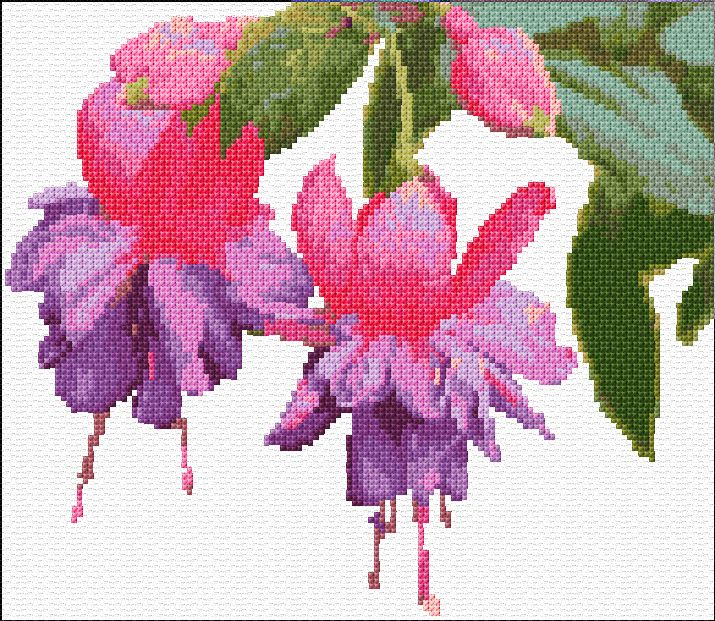 Fuchsia Cross Stitch Flowers Cross Stitch Patterns Cross Stitch Freebies