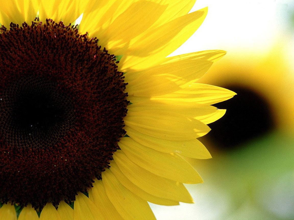 Yoga Pose Of The Month Sunflower Flowers Sunflower Pictures Happy Flowers