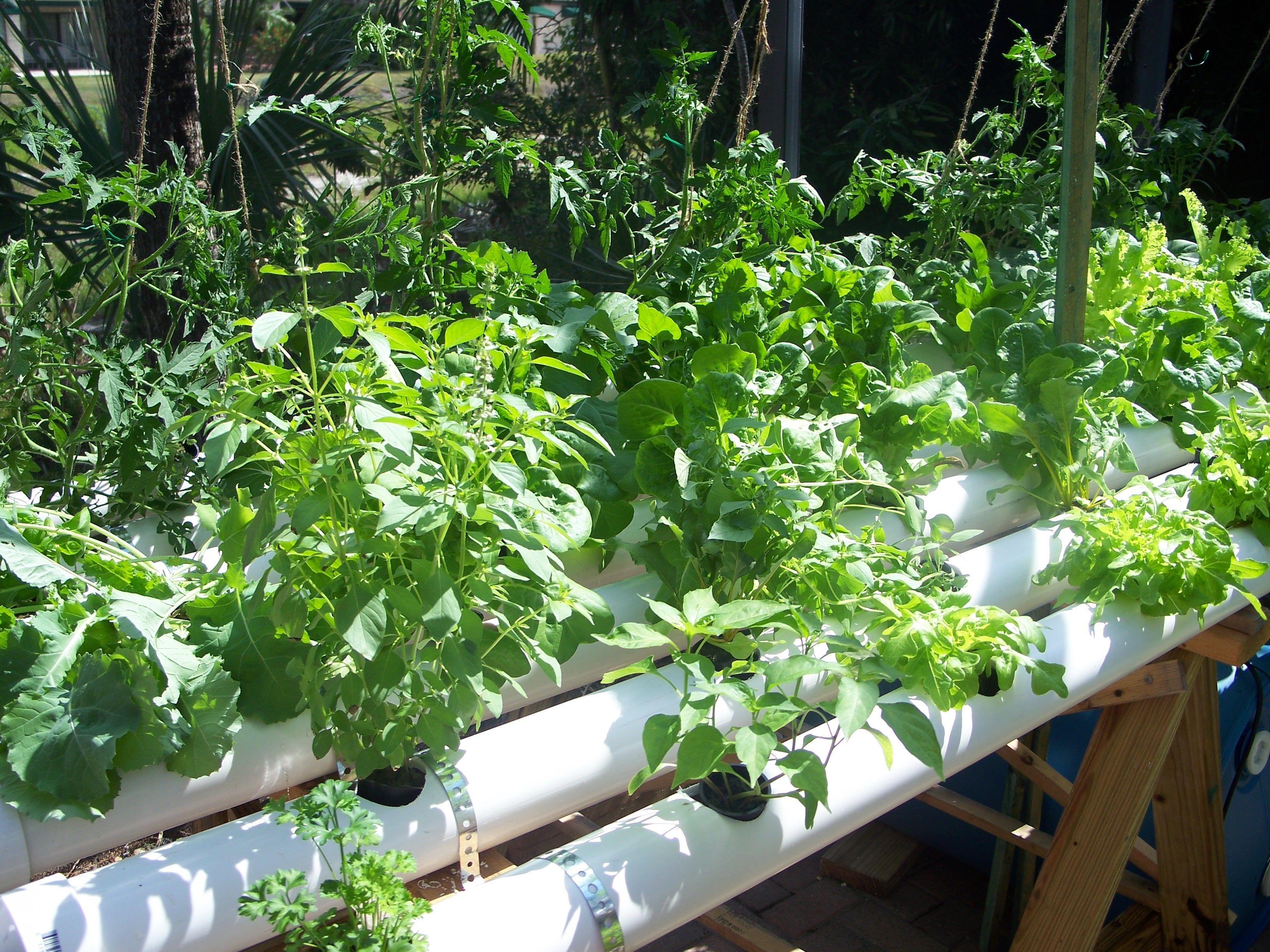 Http://www.hydroponics Simplified.com/hydroponic Growing Medium.html |  Organza Garden | Pinterest | Hydroponics, Hydroponic Growing And Hydroponic  Gardening