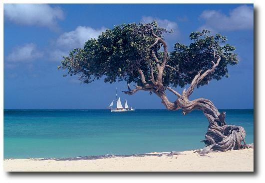 Cruise Ships Aruba Aruba Oranjestad Compare Caribbean Cruise - Cruise ships in aruba
