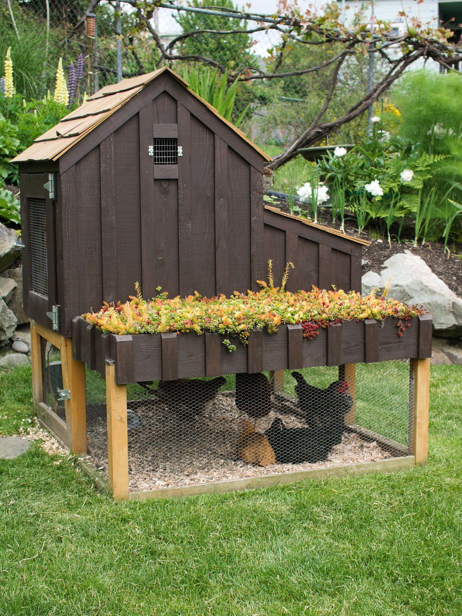 Raising Backyard Chickens Freecycle Usa Chicken Diy Small Chicken Coops Chickens Backyard Small backyard chicken coop designs