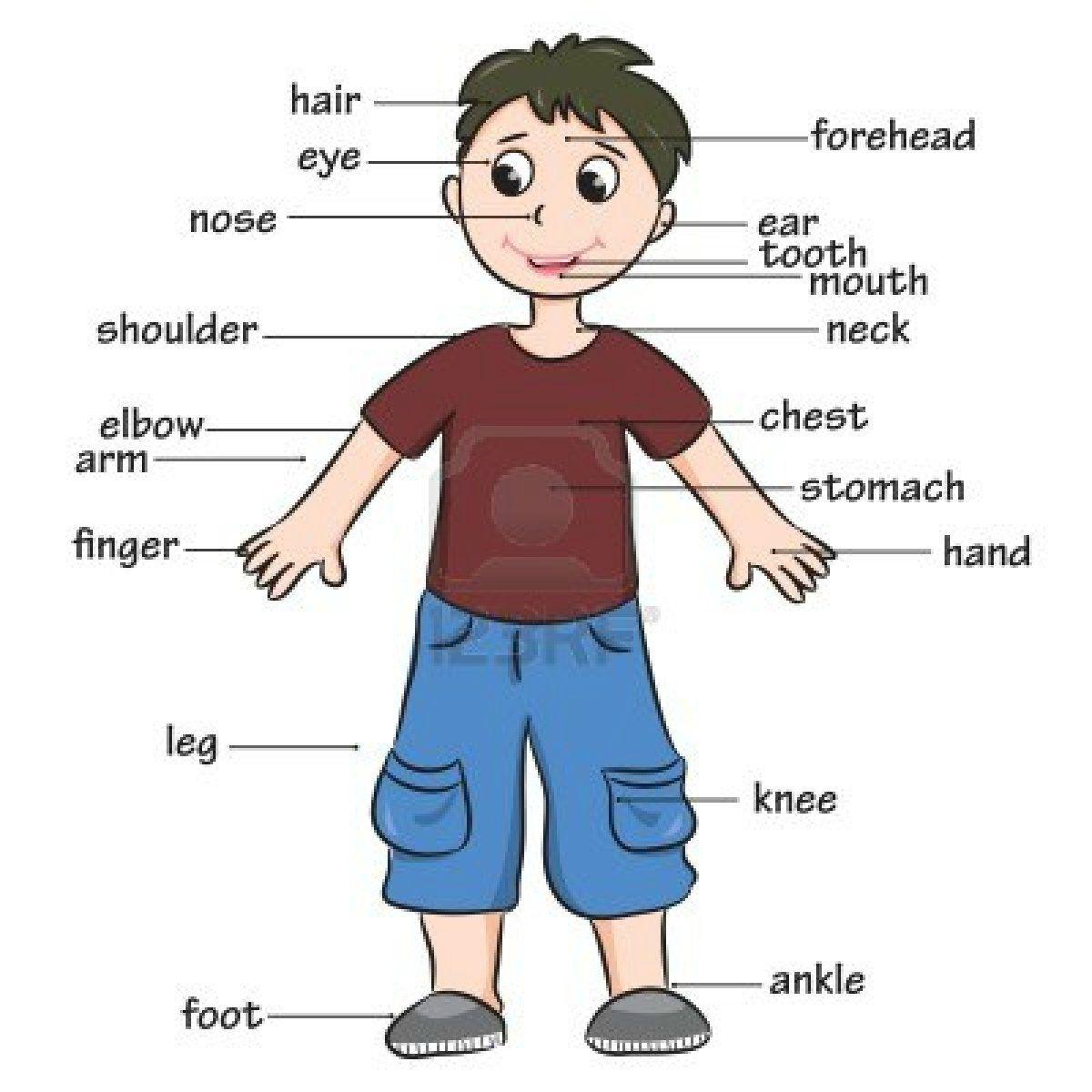 15354745-cartoon-child-vocabulary-of-body-parts