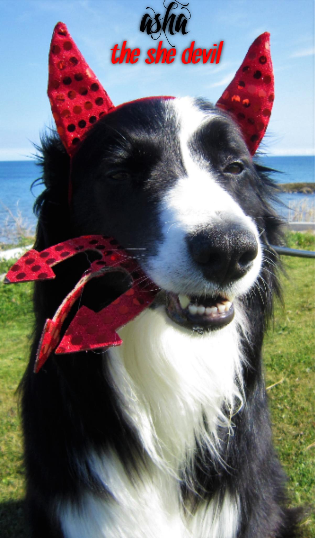 DEVIL DOG HALLOWEEN COSTUME   random cuteness   Pinterest ...