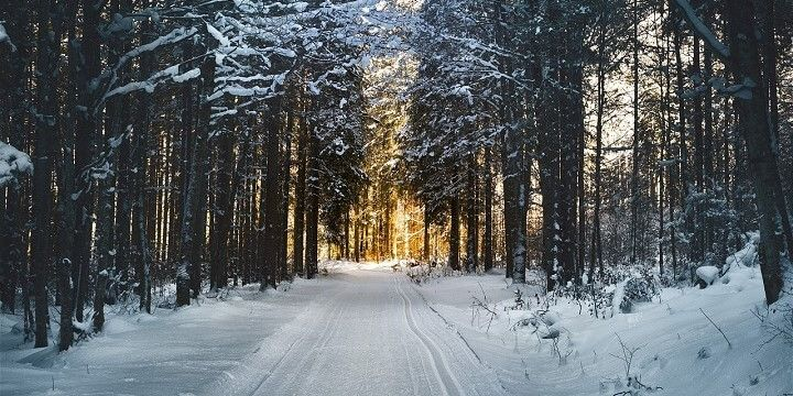 Cross Country Ski, Uusimaa, Finland