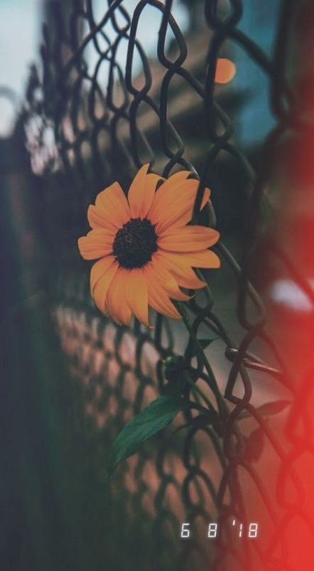 31 Ideas Photography Tumblr Instagram Pictures Nature Sunflower Wallpaper Tumblr Wallpaper Aesthetic Backgrounds Cool tumblr wallpapers instagram
