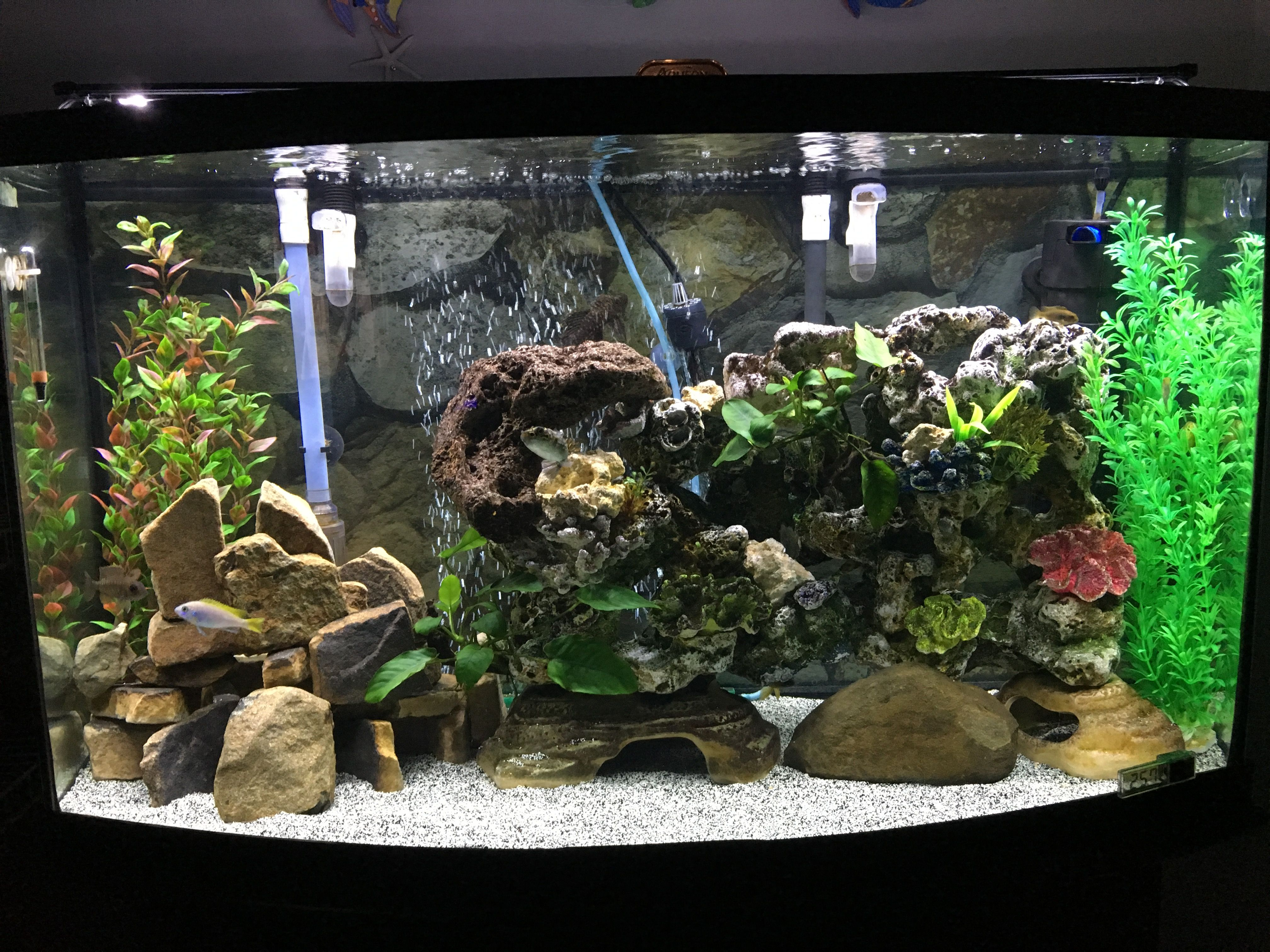Pin by Navarro Edwards on Freshwater Aquariums