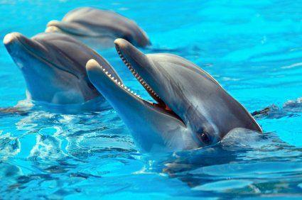Jamaica. (Swim with Dolphins).