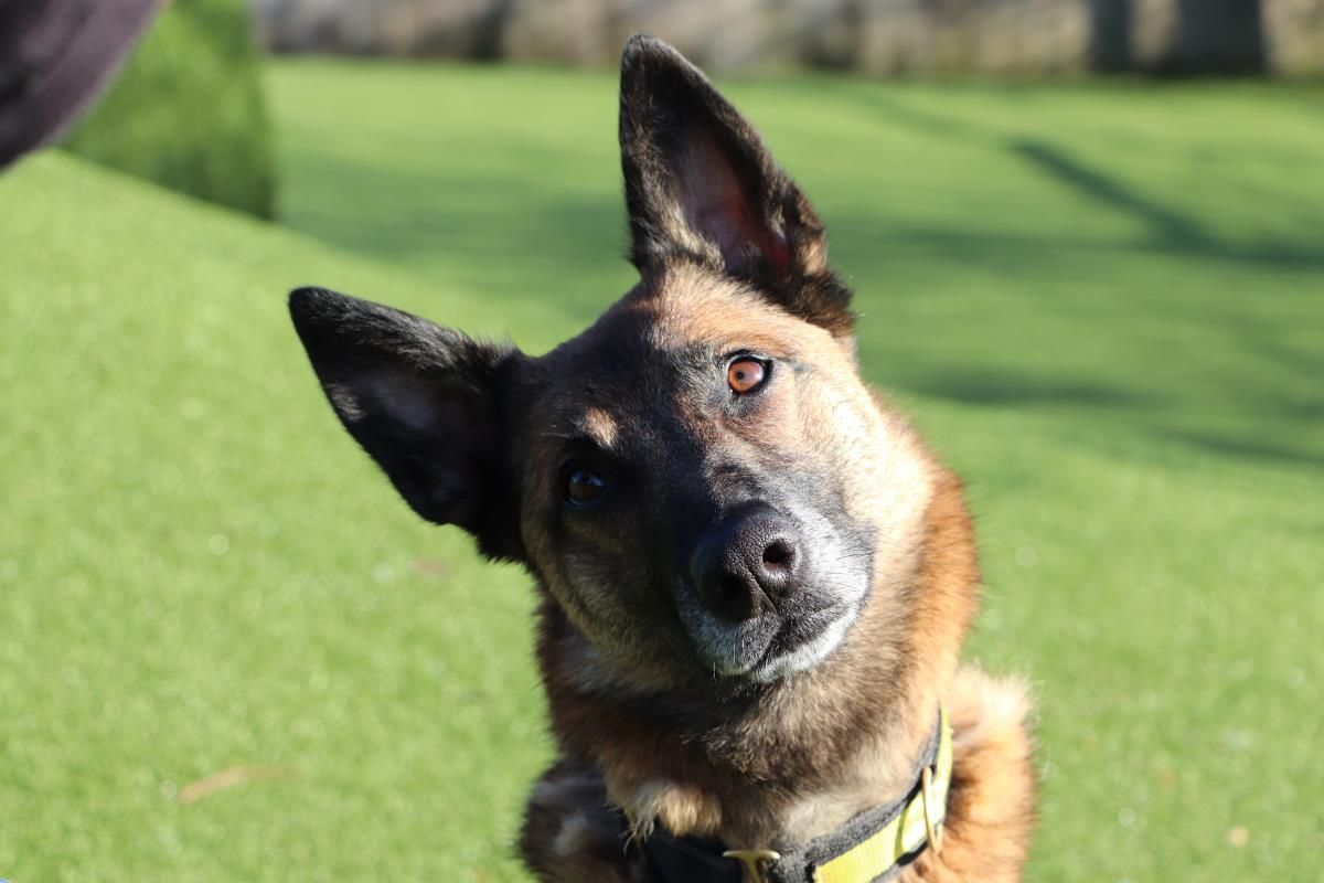 Alessia Dogs Dogs Trust Rescue Dogs