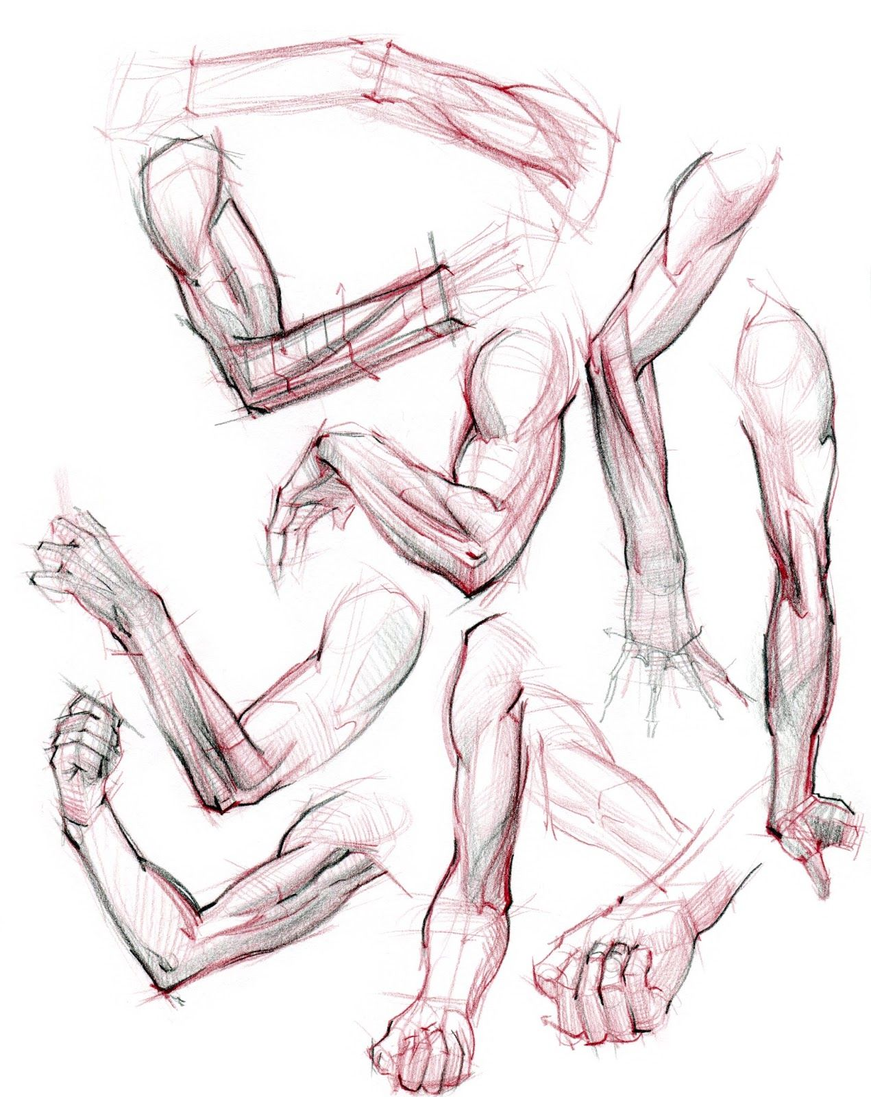 figuredrawing.info_news: Hand/Arm lecture images | REF: Anatomy ...
