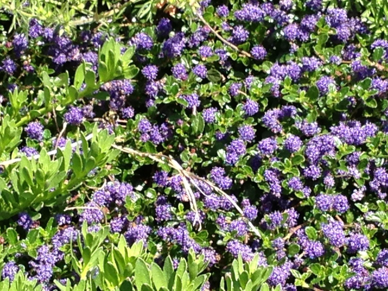 Purple Leaf Plant Identification Make Sure To Visit Gardenanswers And Our Free