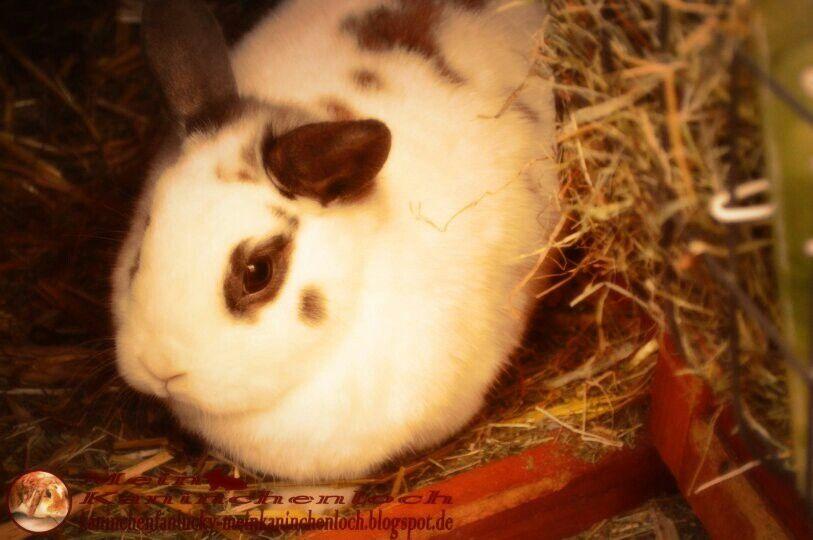 Pin Auf Mein Blog Kaninchenfan Lucky Mein Kaninchenloch