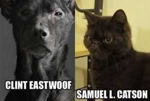 funny, dog, cat, funny dogs, funny cats, cute, If Clint Eastwood and Samuel L. Jackson Were Dogs and Cats