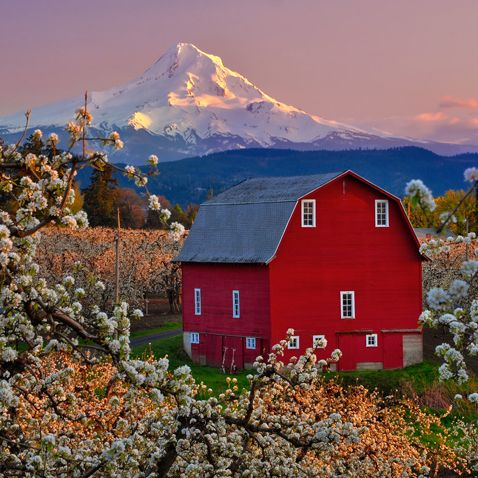 Red Barn, Hood River, Mt. Hood, Oregon. From our artist of ...