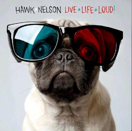 Dailypills Live Life Loud By Hawk Nelson Pugs Sunglasses Cute