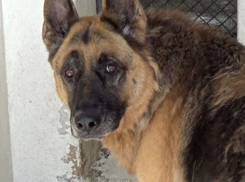 Meet Truman His Situation Is Listed As Urgent After He Was Surrendered To The Carson Animal Care Center On Thursday Here Is A Pet Life Animal Rescue Animals