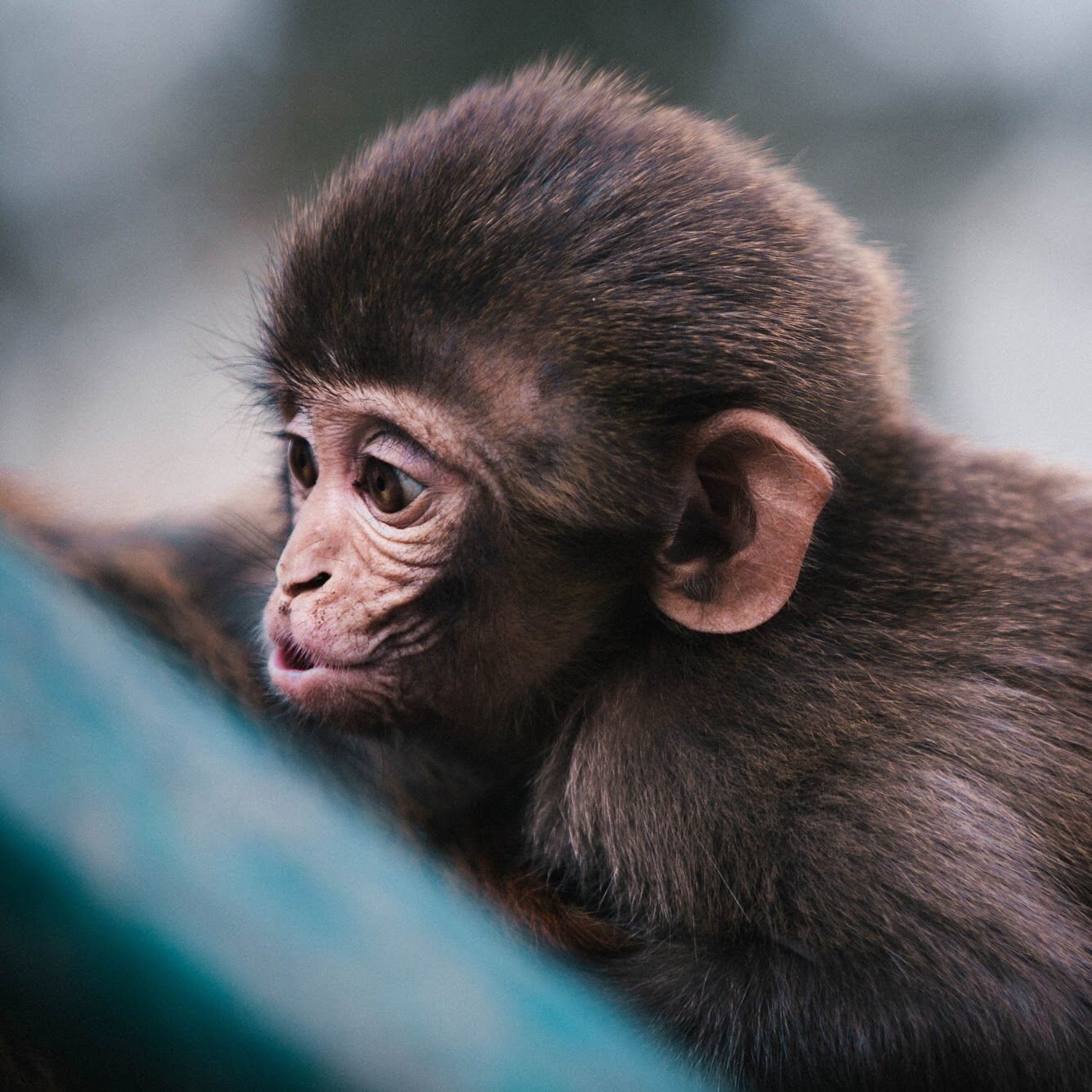 Lol Cute Monkey