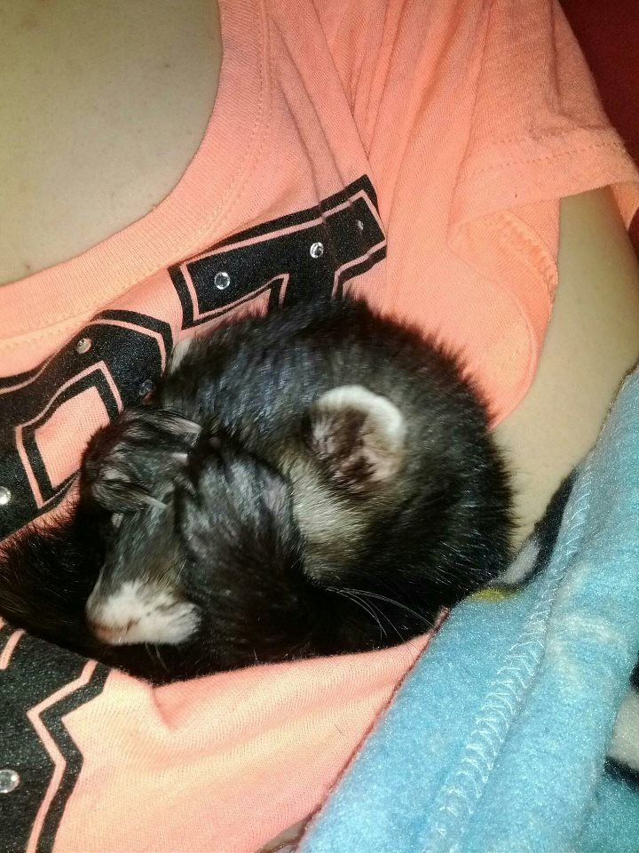 NO MORE PICTURES MOM! & pewter ferret cufflinks http://www.pinterest.com/pin/131941464054658396/