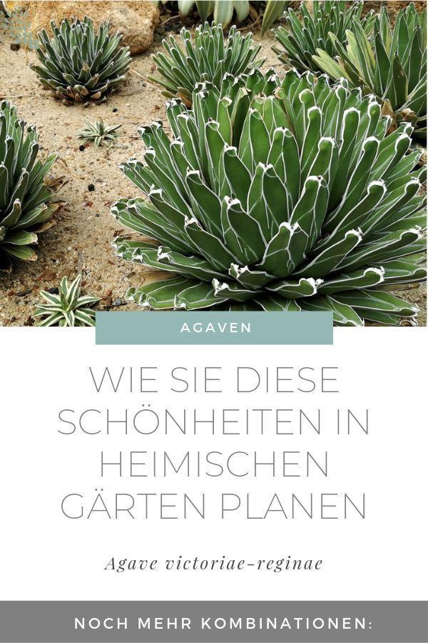 Der Garten im Klimawandel - Wie Sie mit winterharten Kakteen und Sukkulenten einen Wüstengarten anlegen #pflegeleichtepflanzen