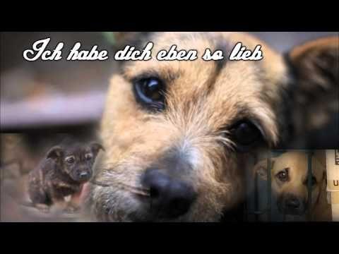 Ich Hatte Dich Lieb Traurige Hundegeschichte Gelesen Von Zacki Traurige Hundegeschichten Hundegeschichten Hunde