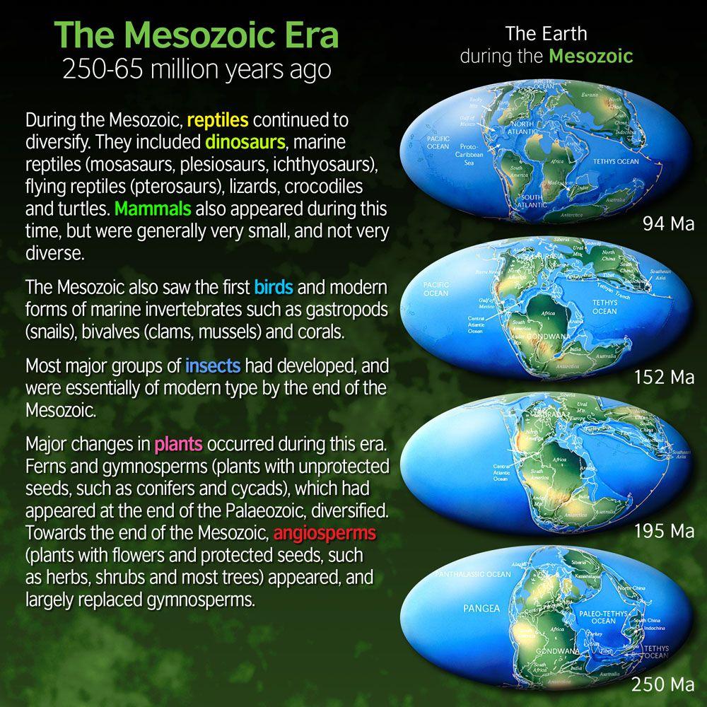 Earths history and the mesozoic era essay