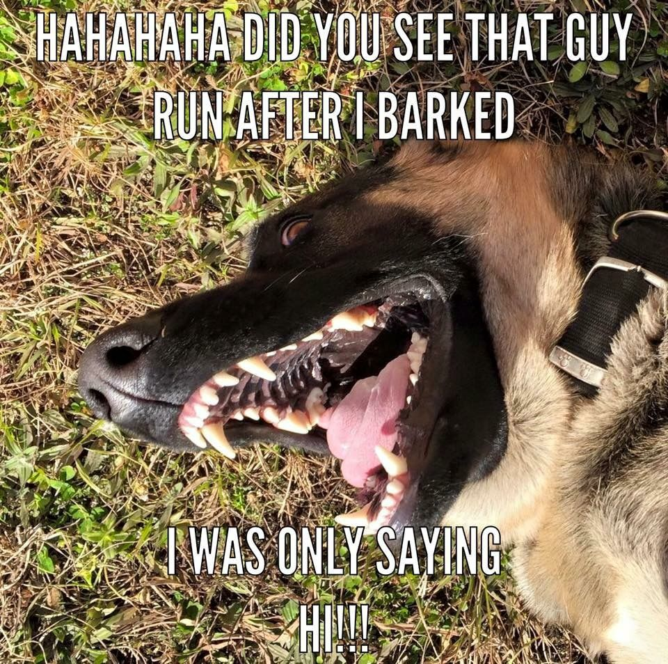 I was only saying hi. - GSD humor