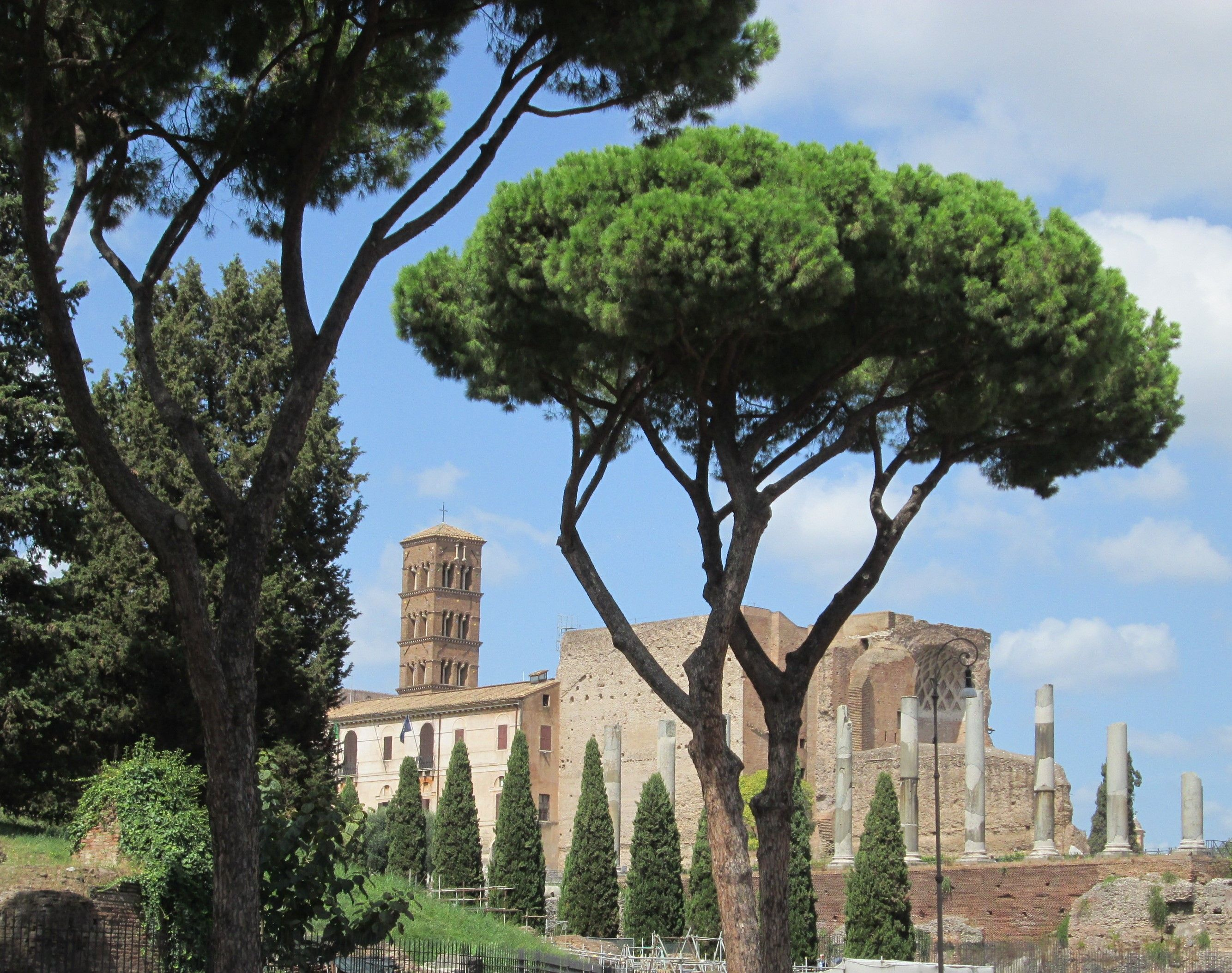 """Image result for pine alley italy"""""""