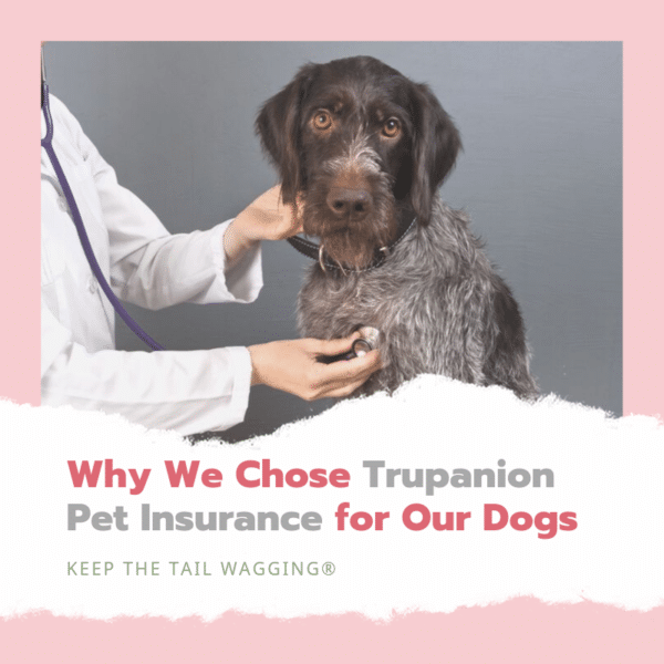 Why We Chose Trupanion Pet Insurance For Our Dogs Medication For Dogs Pets Dogs
