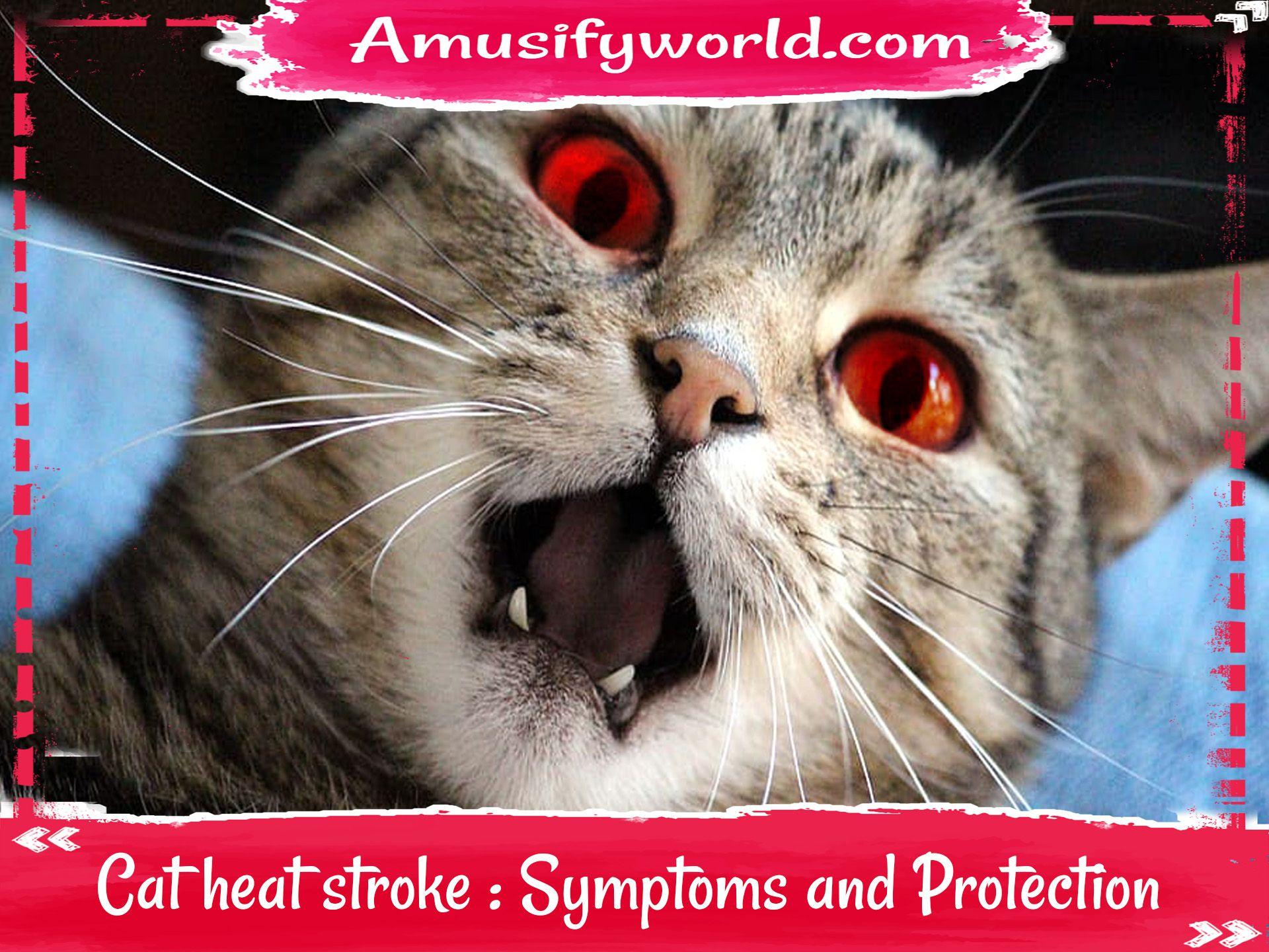 Cat Heat Stroke Symptoms And Protection In 2020 Cat In Heat Cats Heat Stroke