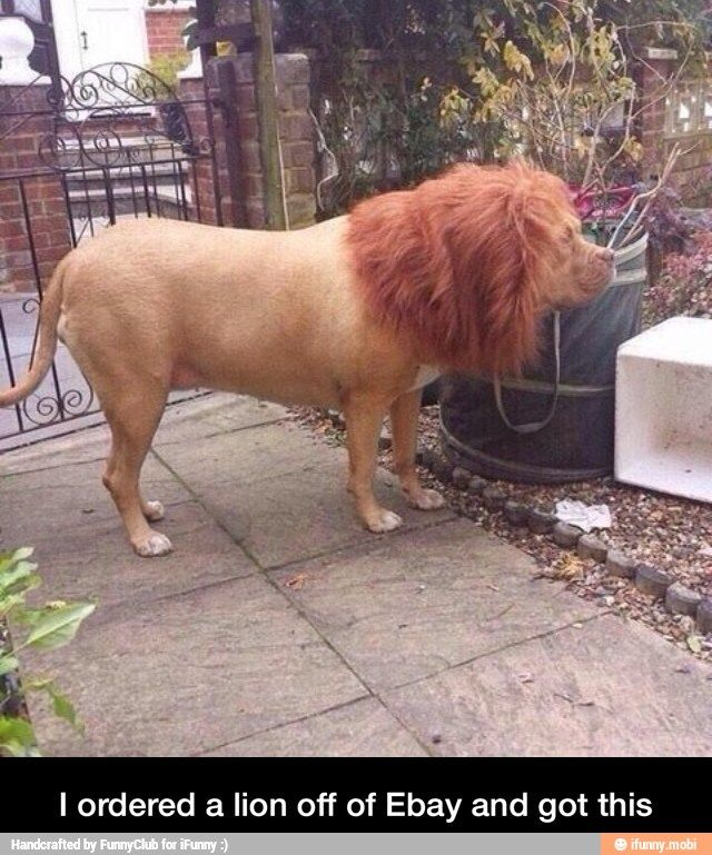 I ordered a lion off of Ebay / iFunny :)