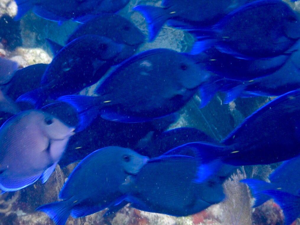 Into the blue .. Coffins Patch , Florida Keys