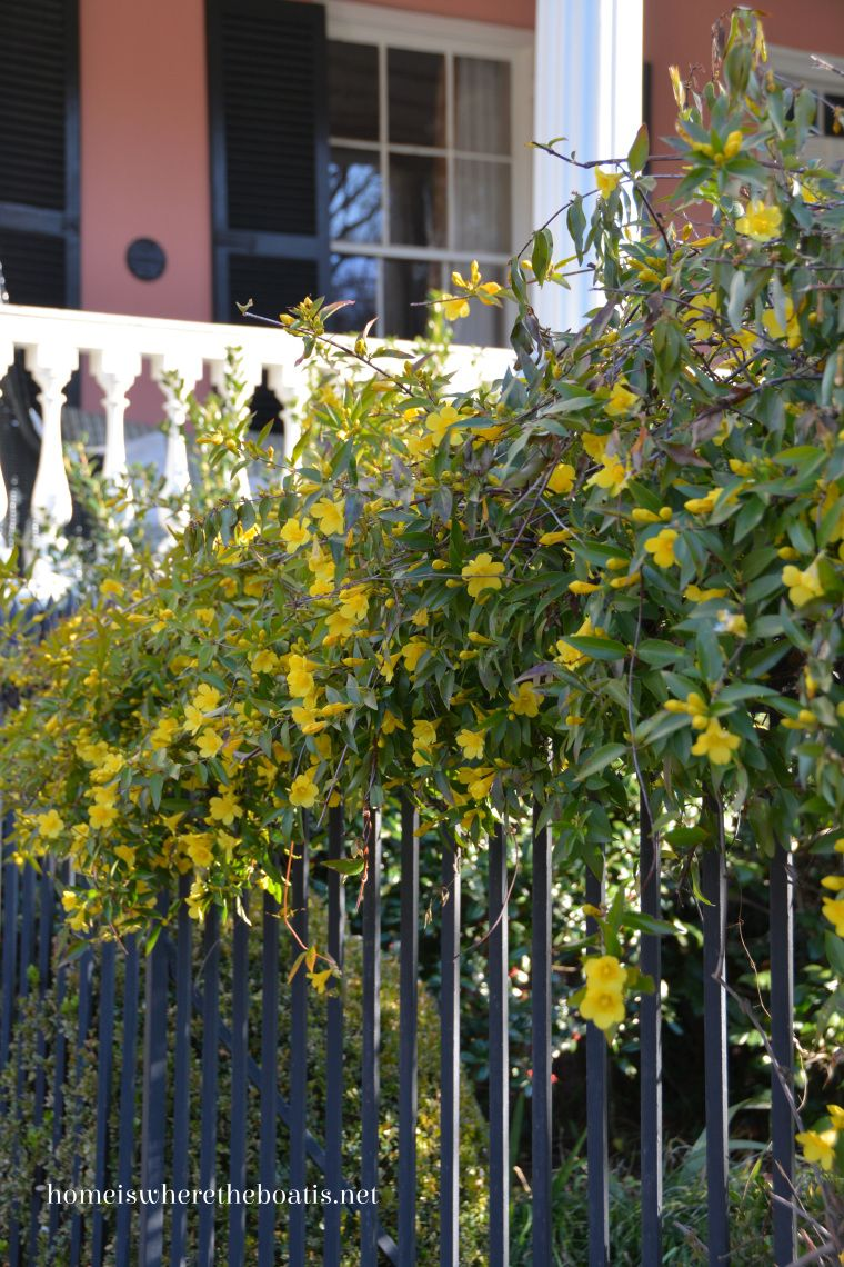Yellow Vine Covered In Flowers Pinterest Flowers