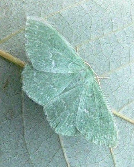 "design-dautore.com on Instagram: ""camouflage � #nature #naturephotography #camouflageinnature #moth #insect #camouflageinsect #camouflage #wildlife"""
