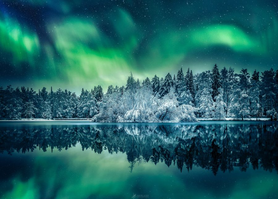 Northern Lights over a forest in Finland. by Lauri Lohi