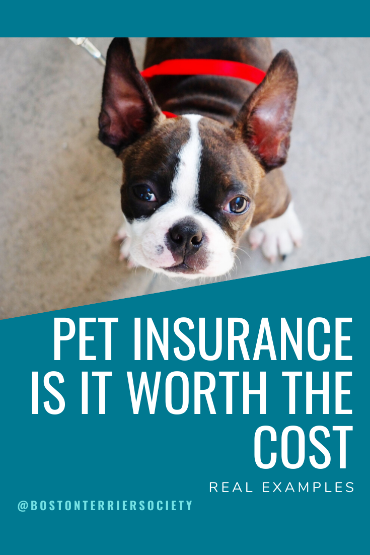 Price Of Pet Insurance For Boston Terriers My Real Example With Images Boston Terrier Terrier Terrier Breeds