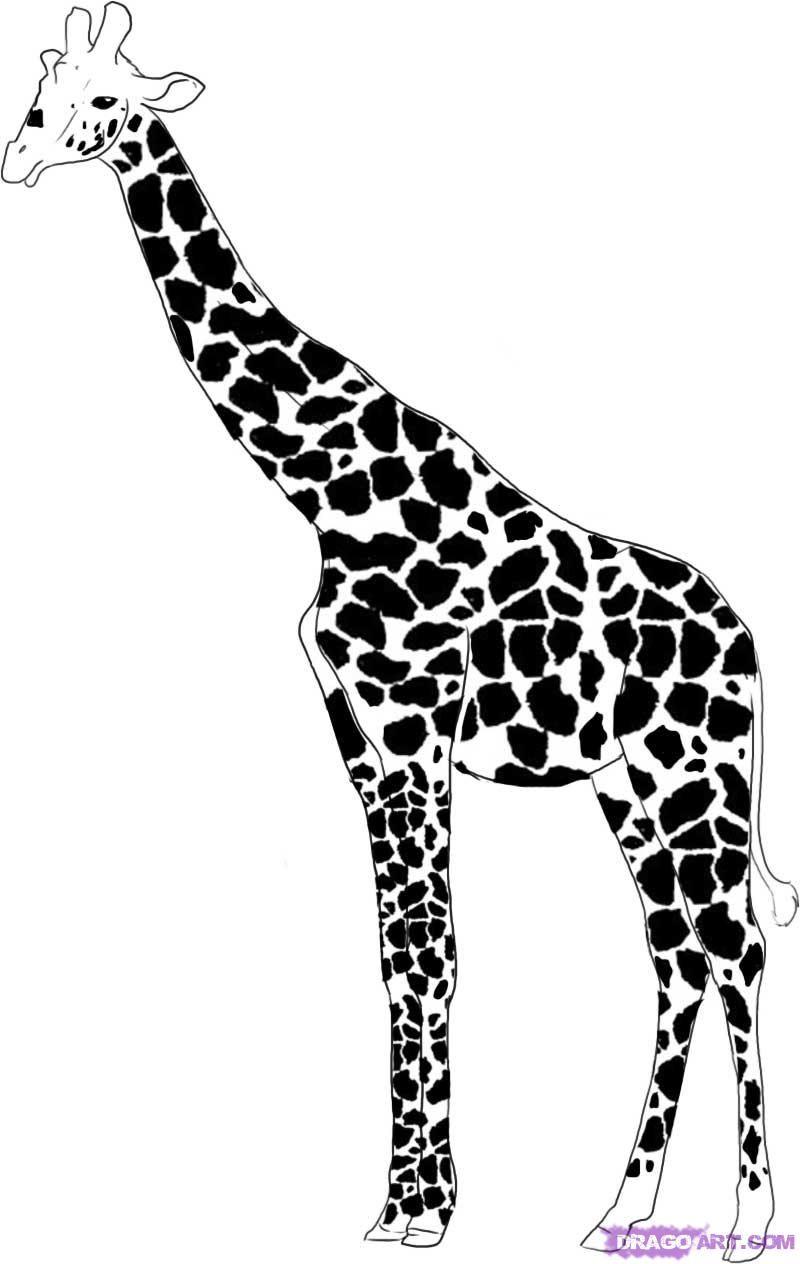 Uncategorized Giraffe Drawings easy giraffe drawings google search animals for drawing search