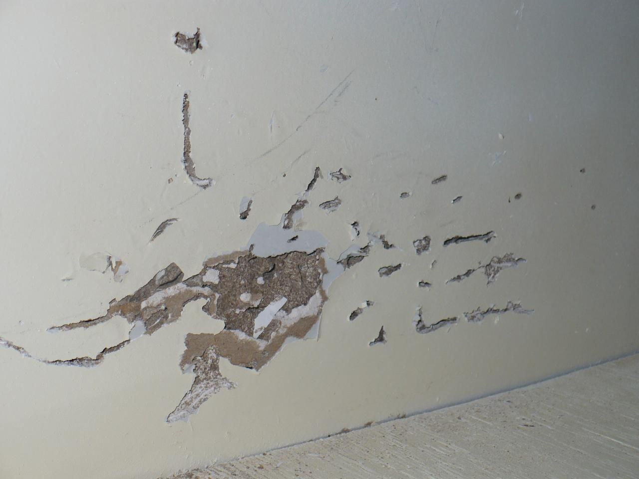 Images Of Termite Damage On Baseboards And Mold Google