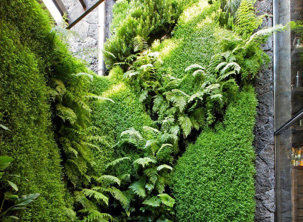 los jardines verticales hidrop nicos se caracterizan por