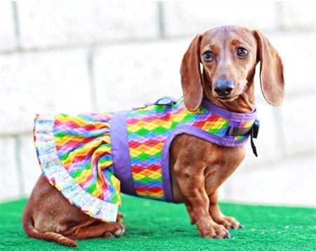 Dog Harness Dress Dog Harness Dachshund Dachshund Love