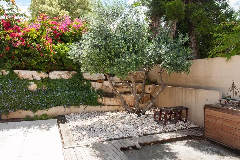 How To Grow Fruitless Olive Trees Olive Tree Landscape Mediterranean Garden Growing Fruitless Olive Tree In 2020 Mediterraner Garten Mediteraner Garten Garten Anlegen