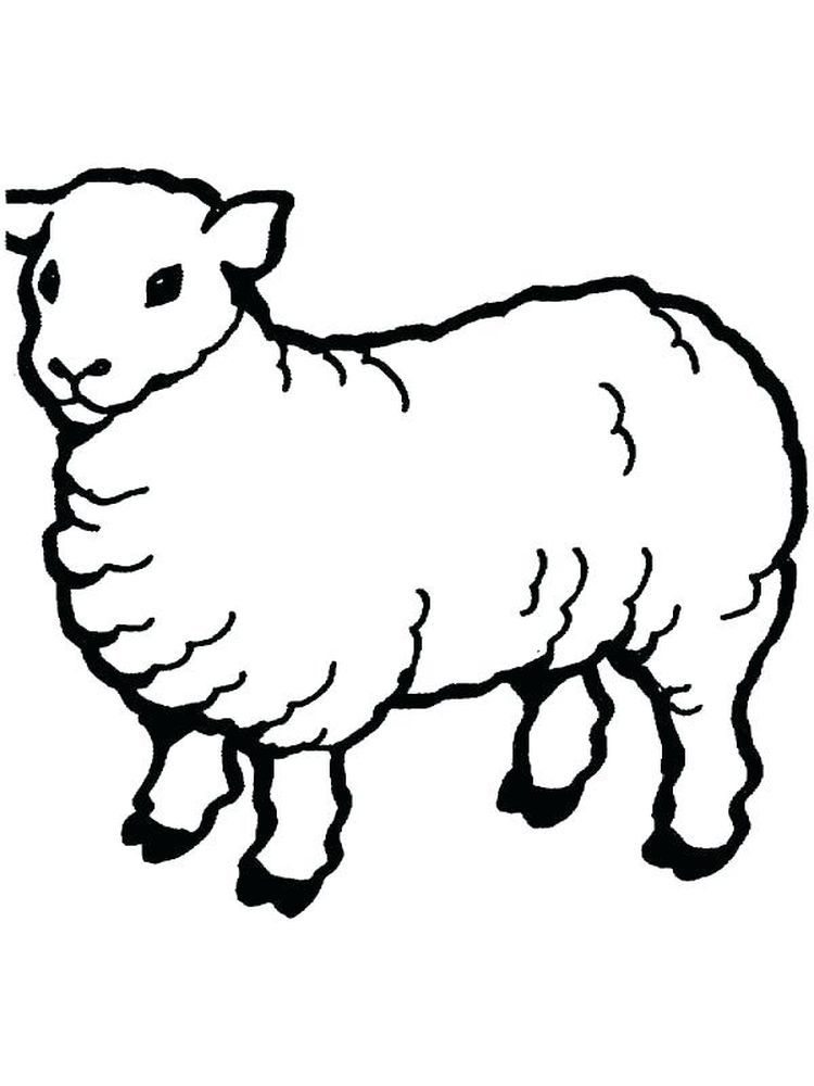 Eid Al Adha Islam Coloring Pages Animal Coloring Pages Sheep