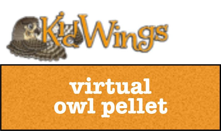 Owl Brand Discovery Kits - Valuable Resources - Kids Zone