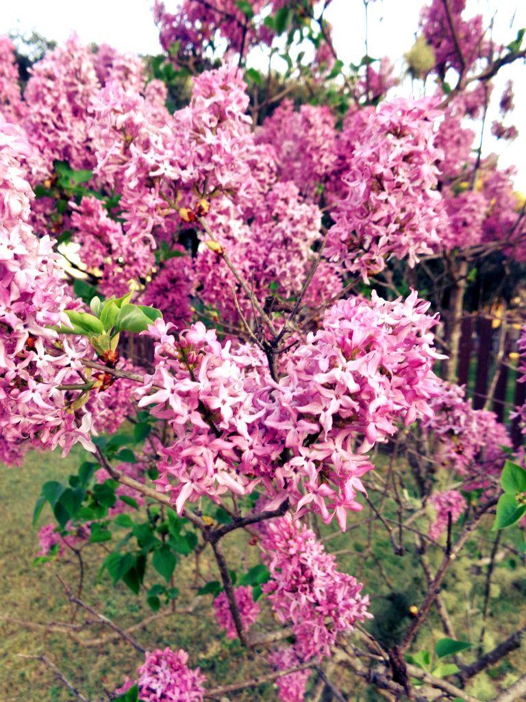 Spring Flowers Startthedaywithsomethingbeautiful Tenterfield
