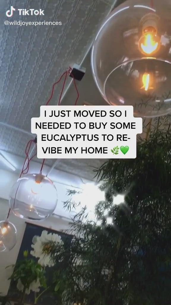 Video Adorable Plant Shop In Phoenix Di 2021