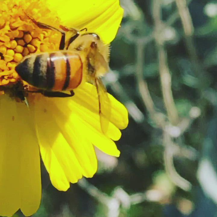 сложно интересные картинки про пчел извиняюсь
