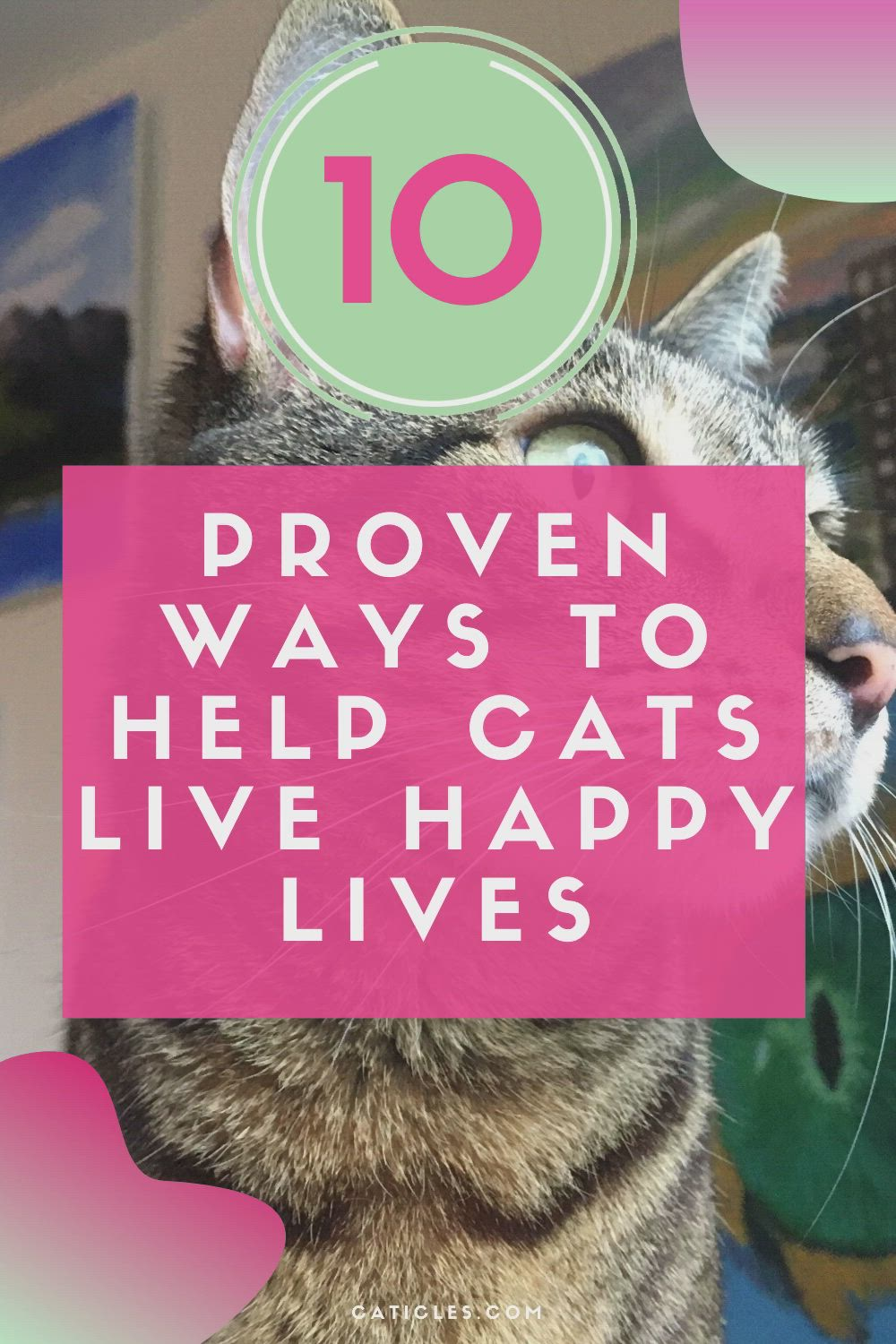 How To Help Cats Get Along Adjust To A New Home And Be Healthy Video Video In 2020 Cat Help Calming Cat Cat Problems