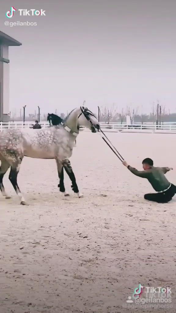 Tik Tok A Dd Geilanbos Video Funny Horse Videos Horse Videos Cute Funny Animals