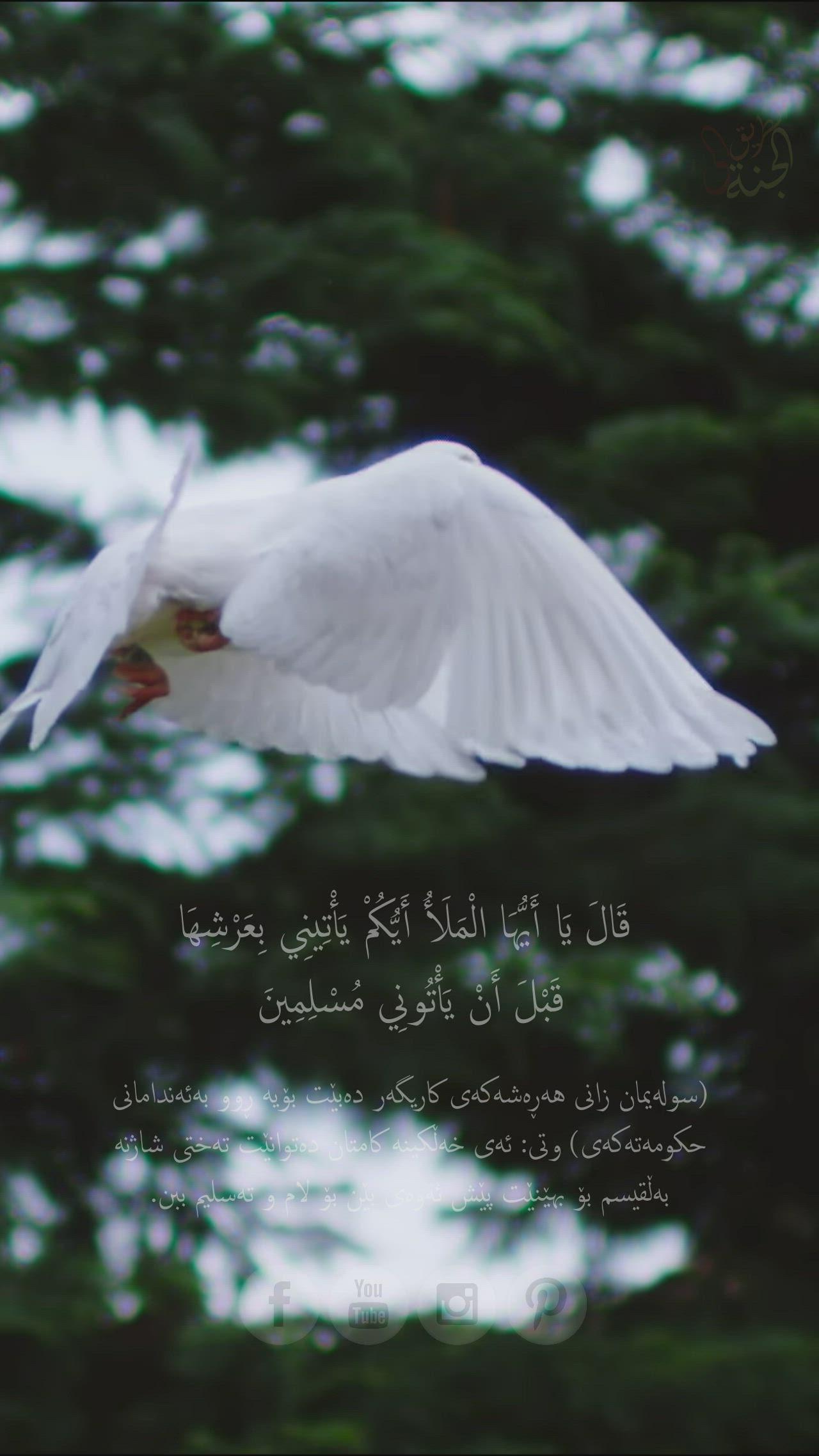 Islam Subhi Surah The Ant Video In 2021 Beautiful Quran Verses Quran Recitation Beautiful Quran Quotes