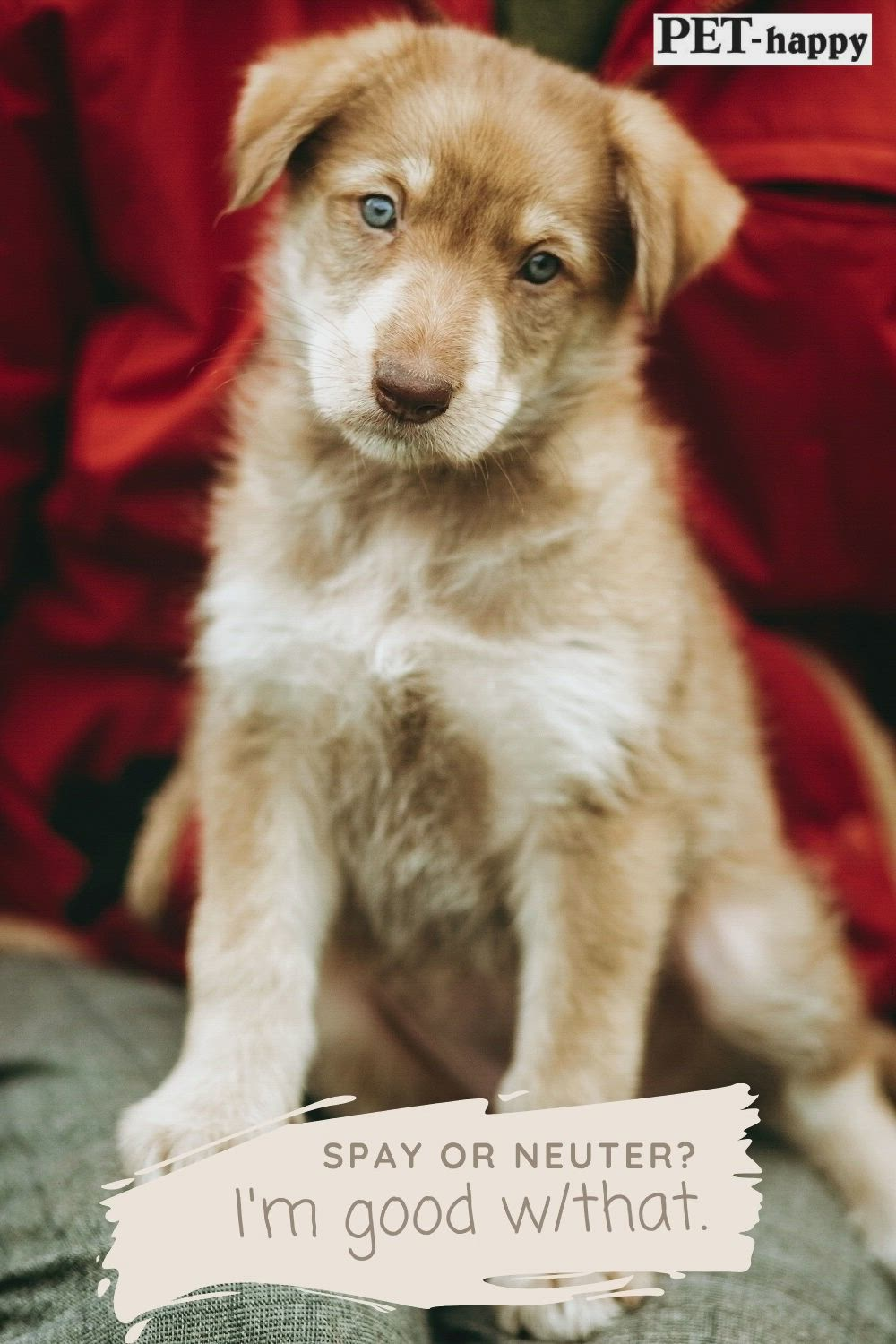 Pros And Cons Of Spaying Or Neutering Video In 2020 Dogs Cute Baby Animals Canine Drawing