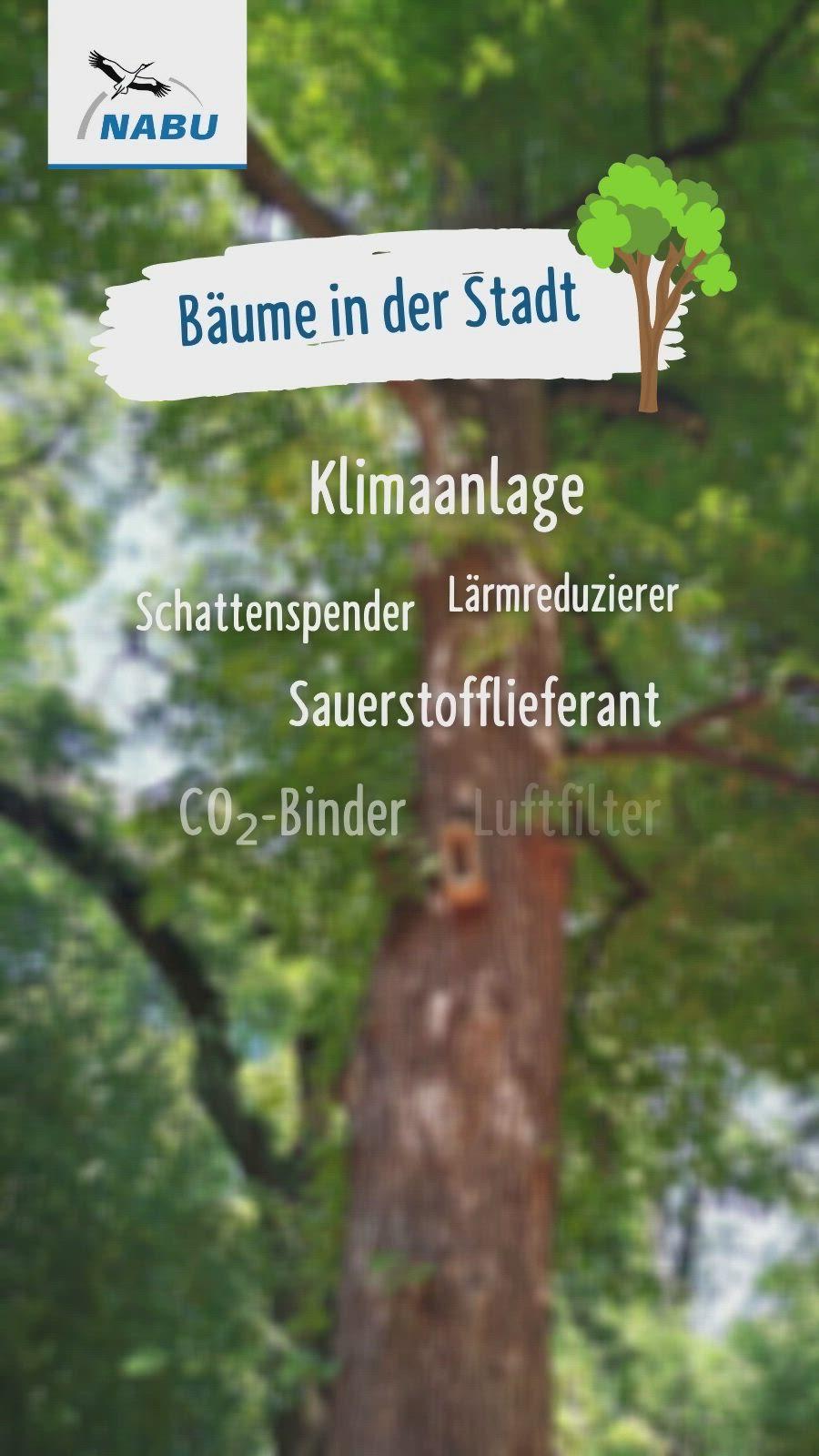Stadtbäume in der Klimakrise   NABU [Video] [Video]   Baum, Leben, Stadt