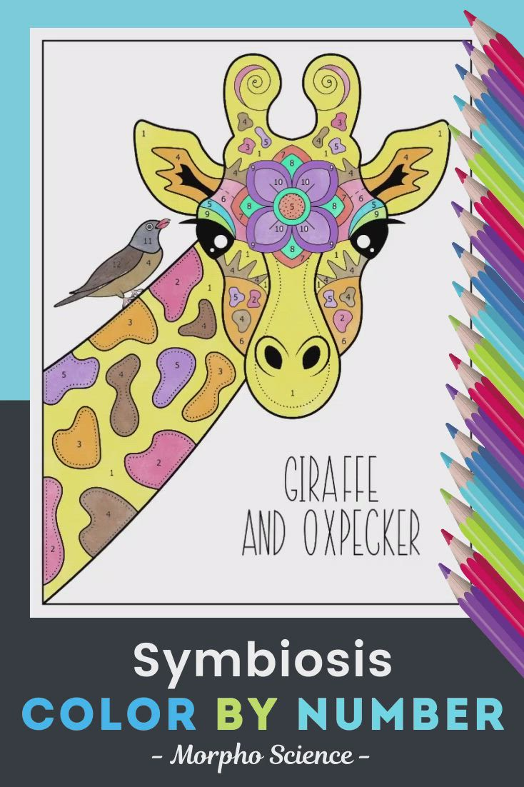 Symbiosis Color By Number Science Color By Number Review Activity Video Video Giraffe Coloring Pages Symbiosis Science [ 1102 x 734 Pixel ]